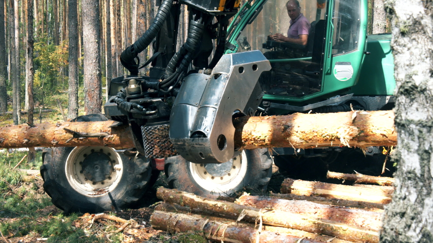 Tractor cuts trunks in pieces while working in forest.