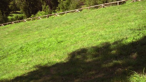 Picturesque hillside with grass, trees and a footpath with wooden handrails
