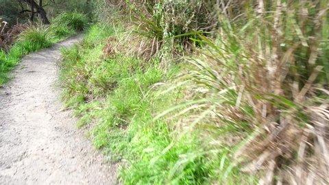 POV camera walk through narrow dirt trail and lush vegetation in Australia