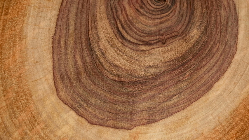 Wooden circle Stump slowly rotates close-up background. Saw cut wood spinning closeup background.