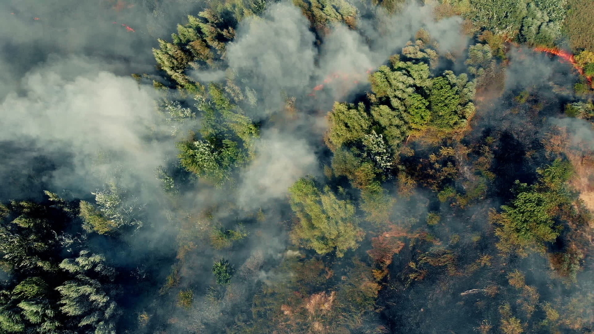 Top view of an invincible forest fire | Shutterstock HD Video #1037183354