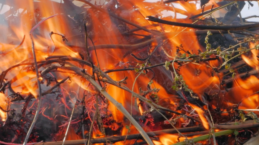 Nature burns, bushes, tree branches,green grass, dry reeds burns with a powerful flame in a fraction of a second, dark blue balls of smoke rise. The concept of summer fires, nature in danger, dark | Shutterstock HD Video #1037190392