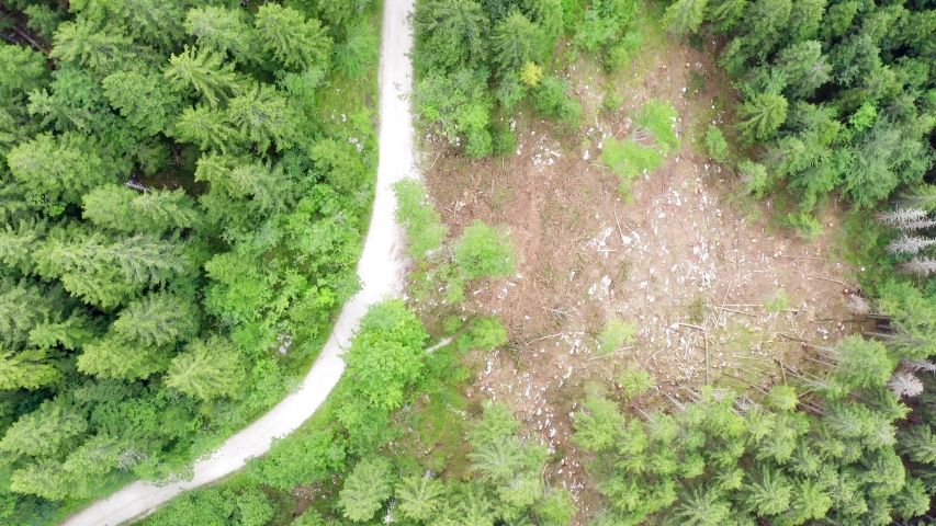 Aerial footage of a dense Slovenian Mountain Forest. | Shutterstock HD Video #1037296814