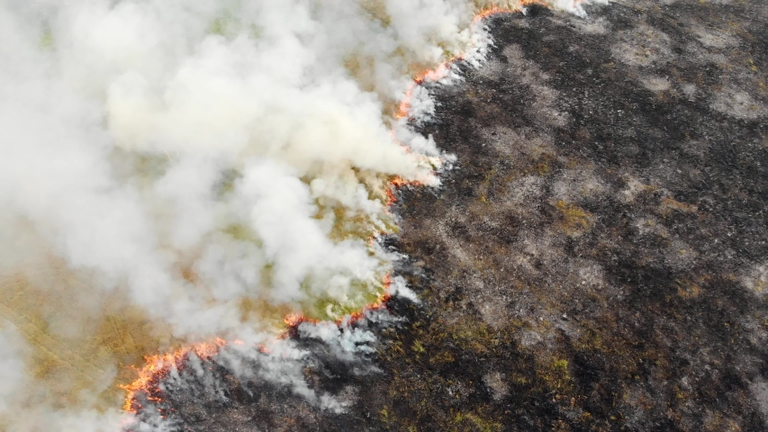 Epic aerial view of smoking wild fire. Large smoke clouds and fire spread. Forest and tropical jungle deforestation. Amazon and siberian wildfires. Dry grass burning. Climate change, ecology, earth Royalty-Free Stock Footage #1037336813