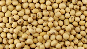 Raw soy bean seed food organic top view texture ,High in fiber, Helps prevent cancer, supplementary food, Protein healthy food, video footage.