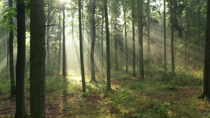 Beautiful morning in the forest | Shutterstock HD Video #1037523215