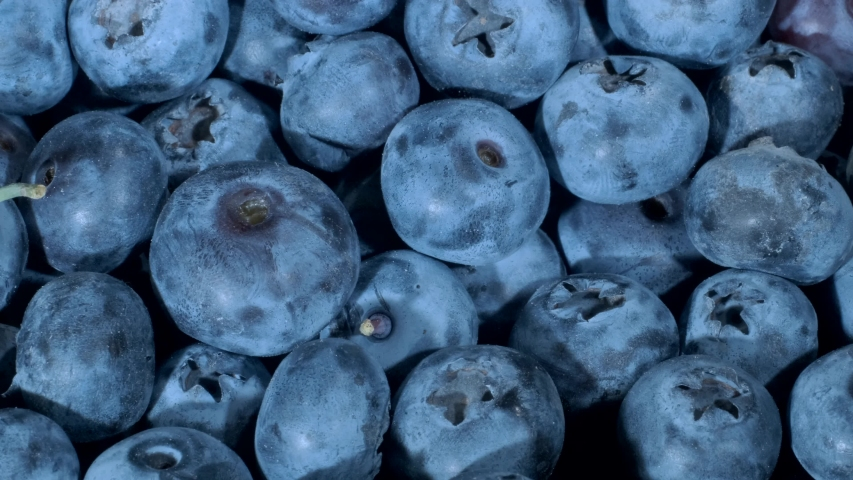 Detail of Blueberries. Macro trucking shot. Camera moves sideway to the right side. Close-up, Top view. Bog bilberry, bog blueberry, northern bilberry or western blueberry (Vaccinium uliginosum) | Shutterstock HD Video #1037589854