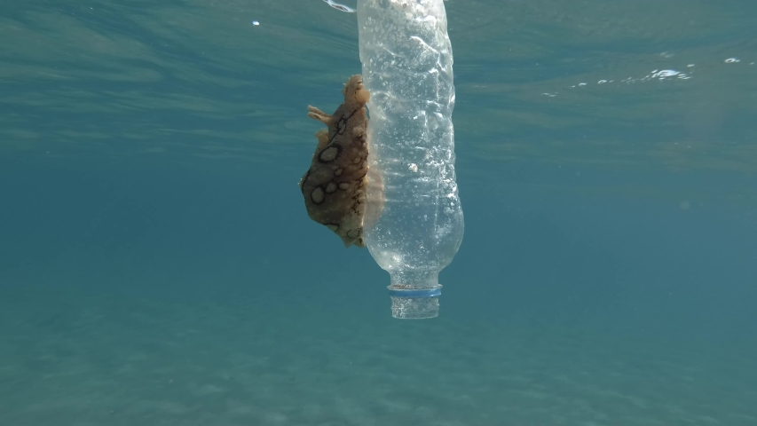Plastic pollution, A beautiful nudibranch sea hare crawls along plastic bottle floats on the surface of the blue water. Nudibranch or Sea slug Spotted sea hare (Aplysia dactylomela) Mediterranean Sea  | Shutterstock HD Video #1037590037