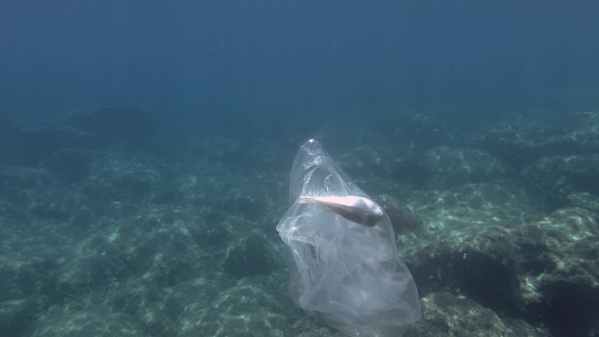 Plastic pollution, is dead Pufferfish  hitting trapped in plastic bag. Discarded transparent plastic bag with died fish inside floats underwater in Mediterranean Sea. Underwater shot.  | Shutterstock HD Video #1037590058