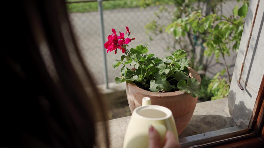 Close up, beautiful young woman watering the flower on a windowsill at home with white watering pot Royalty-Free Stock Footage #1037601872