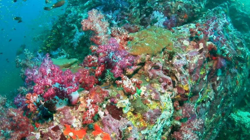 4k footage of tropical fish swimming around a colorful coral reef in Asia
