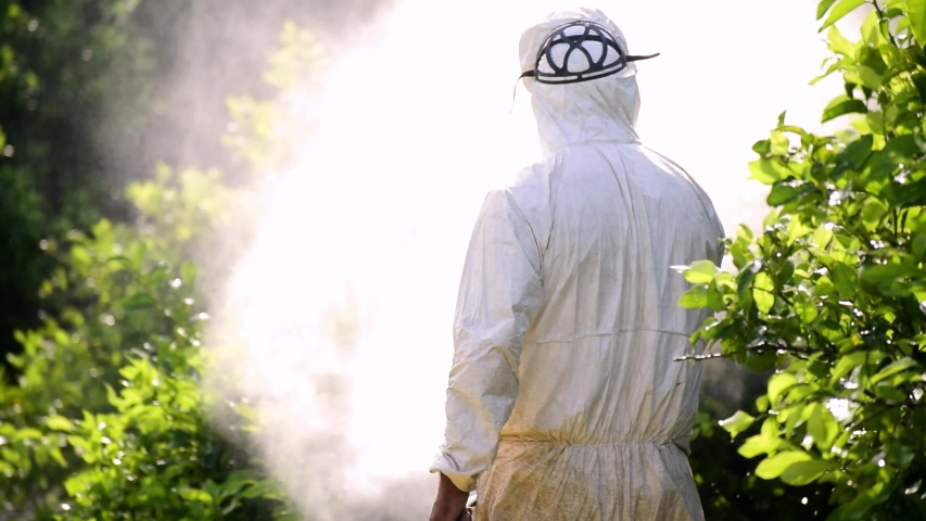 Weed control spray fumigation. Industrial chemical agriculture. Man spraying toxic pesticides, pesticide, insecticides on fruit lemon growing plantation, Spain, 2019. Man in mask fumigating. Royalty-Free Stock Footage #1037662301