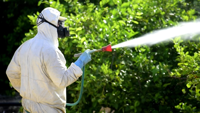 Weed control spray fumigation. Industrial chemical agriculture. Man spraying toxic pesticides, pesticide, insecticides on fruit lemon growing plantation, Spain, 2019. Man in mask fumigating. Royalty-Free Stock Footage #1037663069