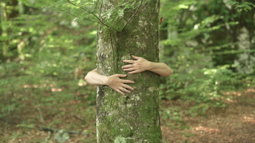 Environmentalist is hugging tree in forest and loving nature. Hands of adult caucasian female environmental activist are wrapped around tree trunk in woods.