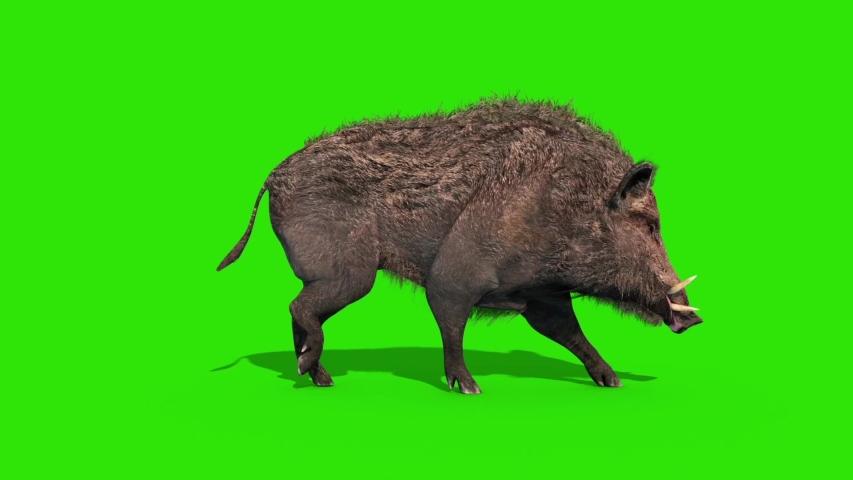 Wild Boar Green Screen Walkcycle Side Loop 3D Rendering Animation