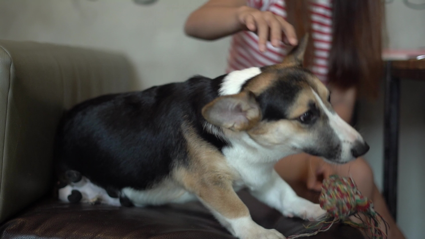 Young asian girl is playing with pet dog on sofa. | Shutterstock HD Video #1037793671