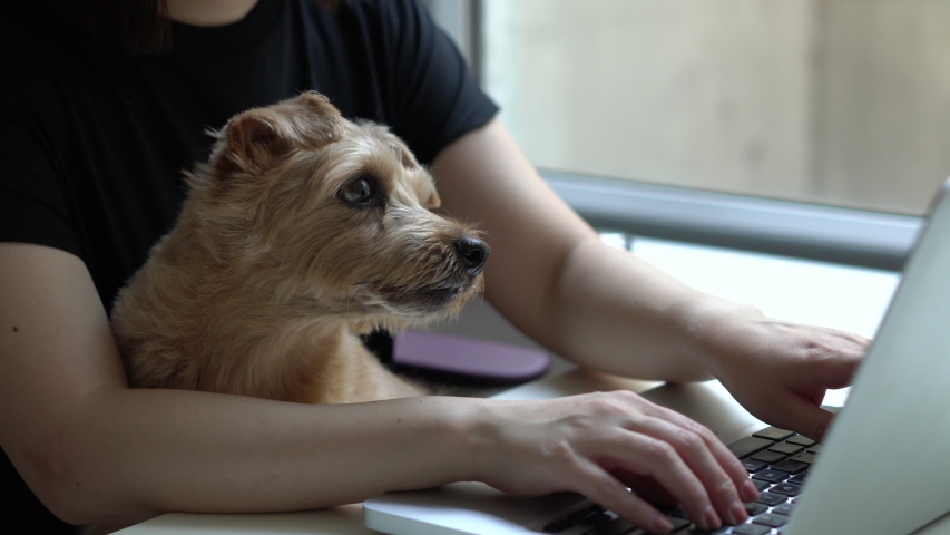 Woman working on computer with Norfolk Terrier dog | Shutterstock HD Video #1037799602