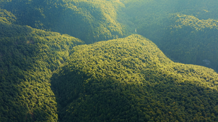 Aerial view of Tropical Rainforest in Amazon. Flying above Jungle. Green Trees