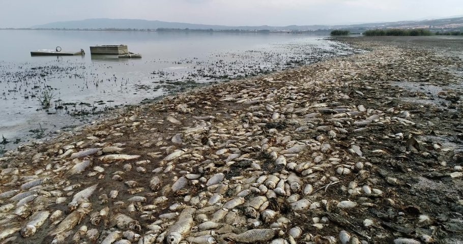 Thousands of dead fish around Lake Koroneia in northern Greece. the high fish mortality is largely due to a drought and the sharp drop in water. global warming effect, climate change | Shutterstock HD Video #1037837903