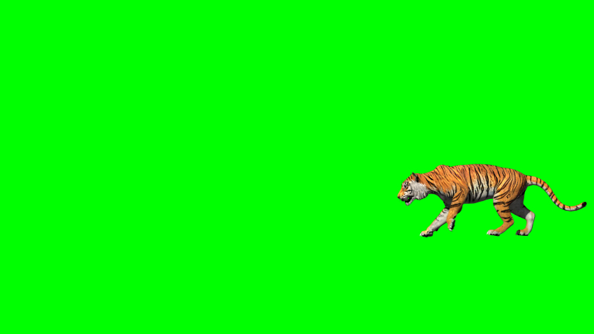 Bengal tiger nice walk and jump between cliff realistic with 3D animation rendering side view include alpha and green screen.