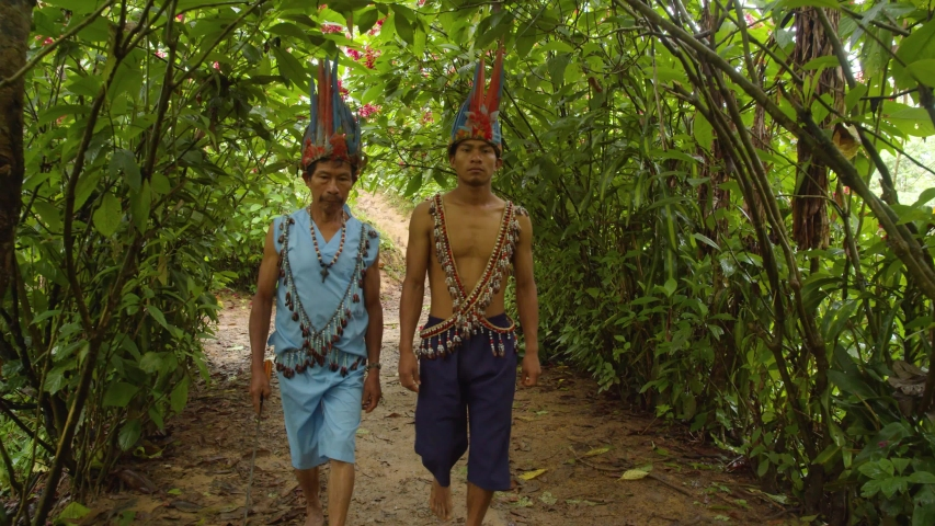 Indigenous people going to cut a liana of ayahuasca in ecuador | Shutterstock HD Video #1037896373
