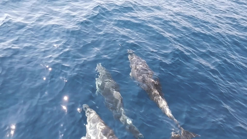 Dolphins playing & swimming p2