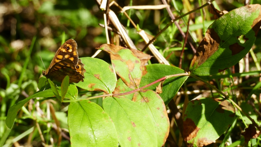 Brown butterfly on the leaf with wind in the forest | Shutterstock HD Video #1037940320