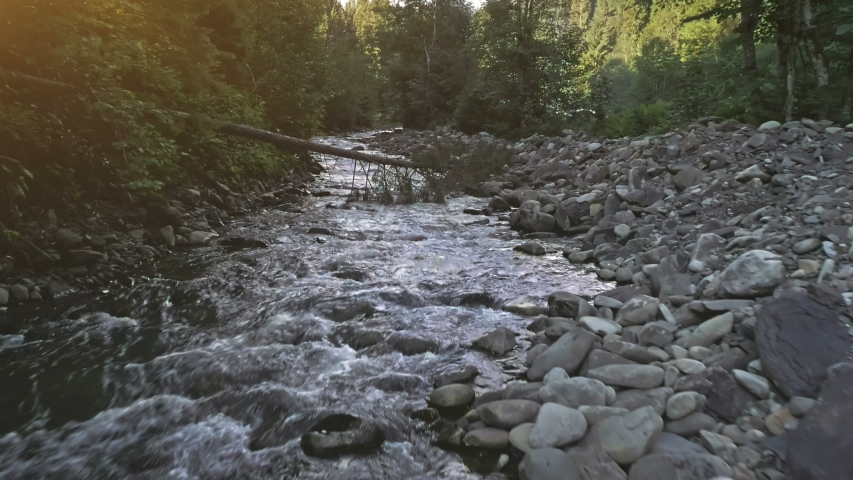 Fast River Rapid Mountainous Stream Pine Forest. Camera Tilt from Babbling Cascade Creek to Dense Coniferous Wood. Cinematic Aerail View. Flying Over Carpathian Mountain Landscape. Footage Shot in 4K