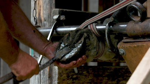 Man cleaning horse foot close up. Farrier working with horses leg in the barn.