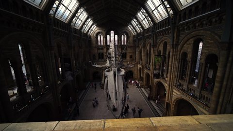 LONDON, ENGLAND - SEPTEMBER 10, 2019: Moving steady cam shot in Natural History Museum main hall with Blue Whale skeleton exhibition. Concept of science, education, school, history, biology.