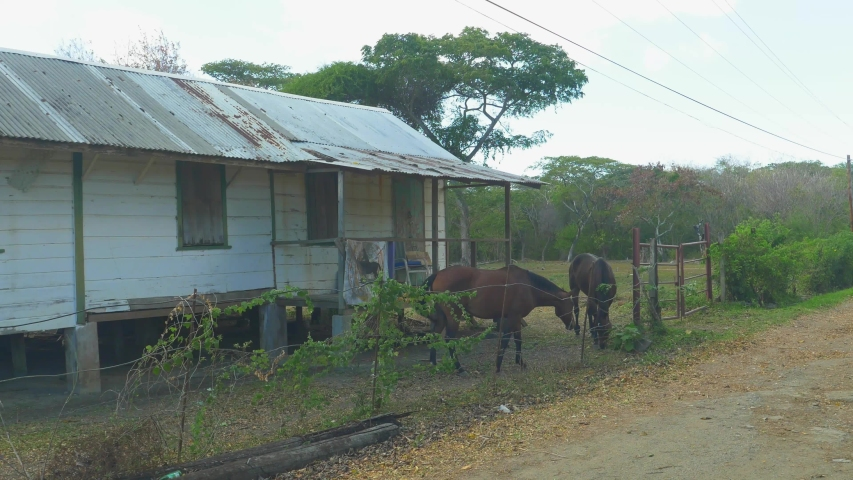Horses grazing at an abandoned building