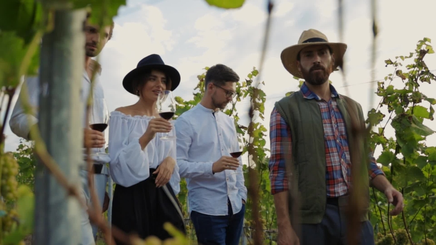 Attractive luxury friends tasting wine walking with winemaker along grape vines on vip group wine degustation tour. Winery culture.