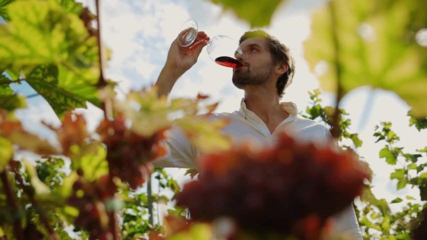 Attractive young man drinking pinot noir tasting wine at grapes harvest vines outdoor. Portrait of cheerful sommelier enjoying wine at his own plantation.