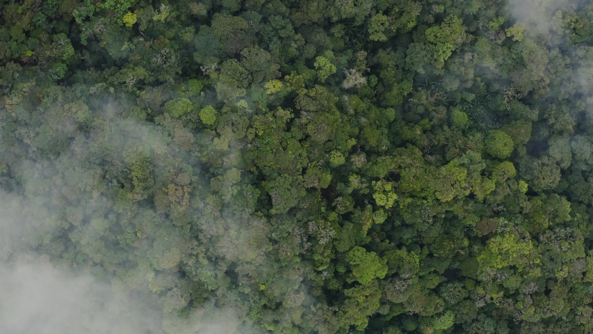 Dense rainforest jungle covered with mist aerial view in slow motion, Malaysia