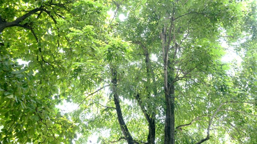 Tree leaves blow in the light wind | Shutterstock HD Video #1038248822