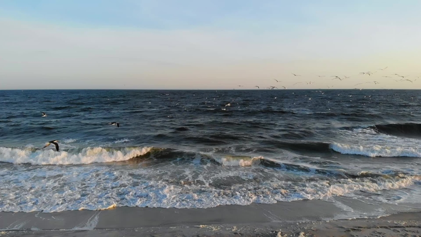 Slow motion panoramic view of the behavior of nesting and migrant birds flying in groups over the waters of Lido beach, Long island, New York, at sunset