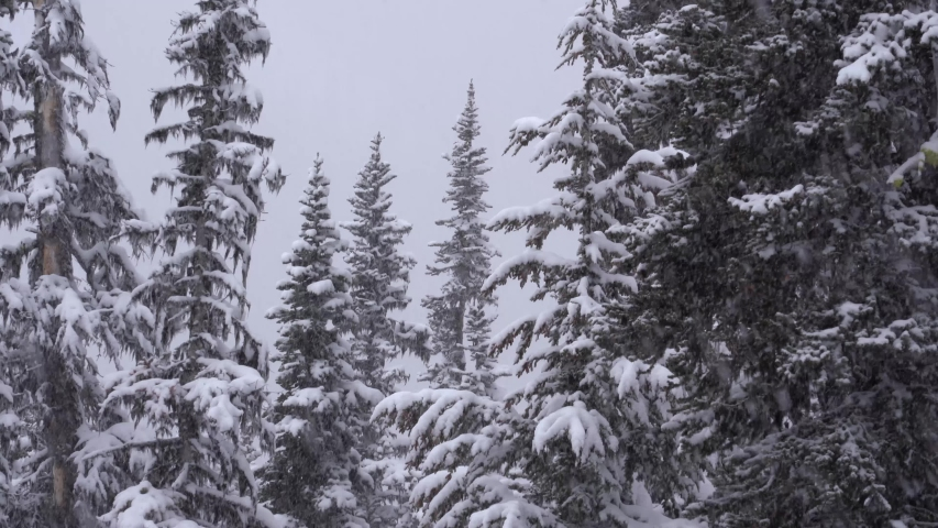 4K footage of thick snowfall in winter on forest trees   Shutterstock HD Video #1038405797