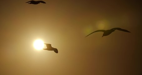 4k video of few seagulls that fly on the background of burning sun at the sky.