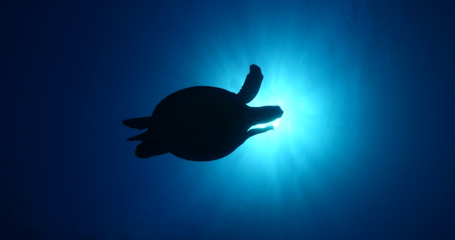 Turtle underwater with sun beams and sun rays slow motion blue water ocean scenery  silhouette   Shutterstock HD Video #1038452702