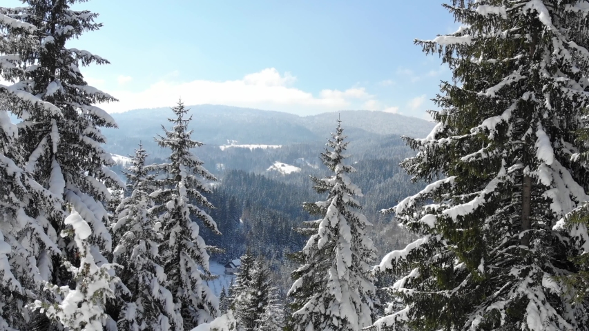 Drone footage snow covered trees, winter nature beautiful Europe aerial view pine forest mountain, season travel white frozen nature idyllic