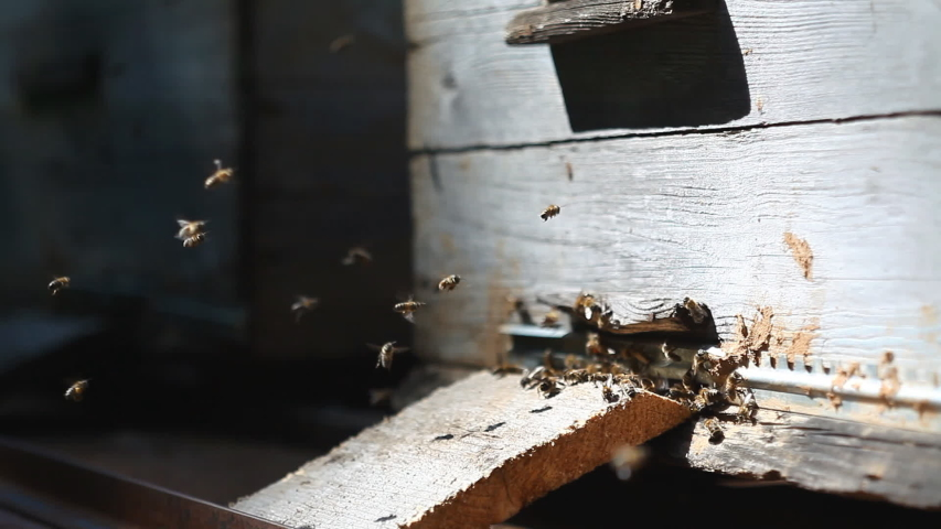 Honey Bees surrounding beehive boxes in wild forest    Shutterstock HD Video #1038560492