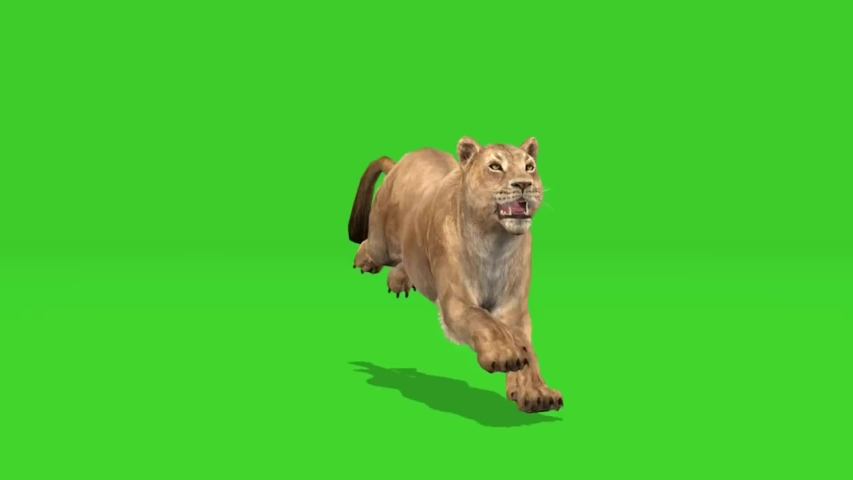 3d Tiger Attack On Green Screen