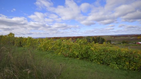 Vineyard Winery Wine Tasting Grape Travel Trip Vacation Michigan Blue Fall Colors Orchard Farm Farming Vines Green Explore Beautiful Landscape
