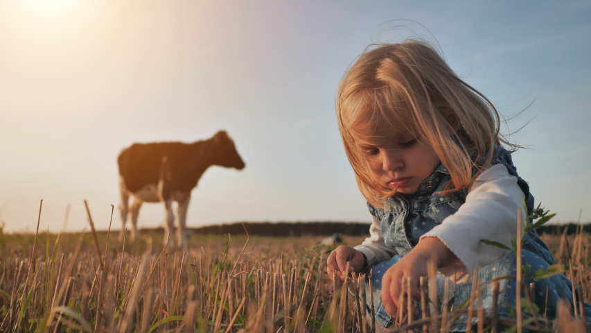 A little girl sits in a field against the backdrop of a lonely cow.