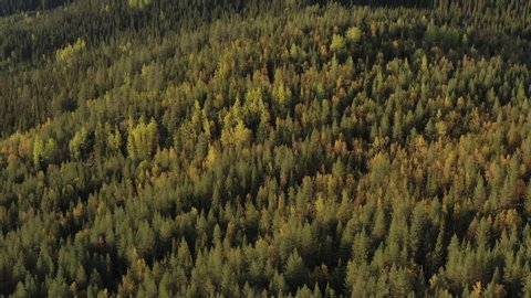 Autumn forest aerial filmed during golden hour right around sunset in northern Sweden (southern Lapland).