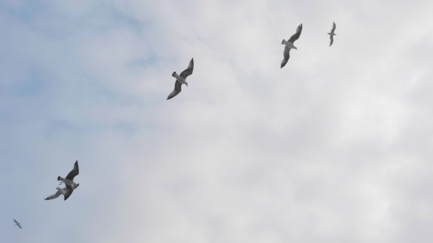 Beautiful flock of seagulls flying overhed of a boat. Group of seagulls on the sky. #1038651308