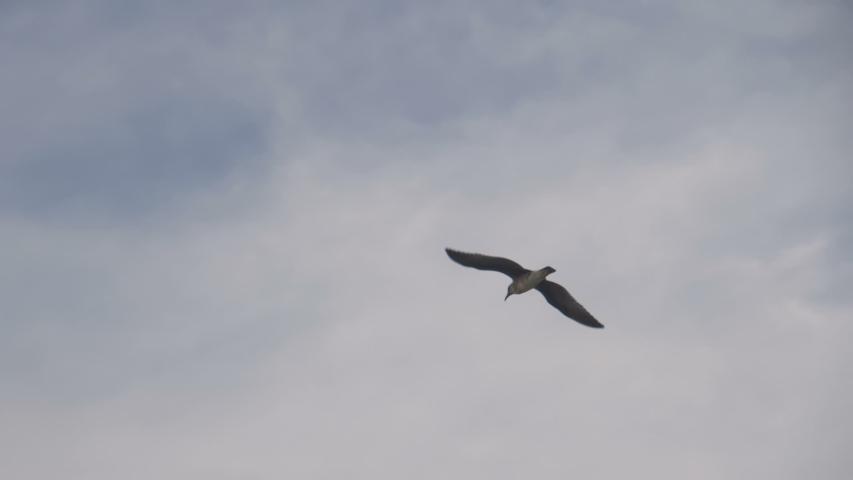 Seagull Flying Slow Motion 180fps   Shutterstock HD Video #1038769418