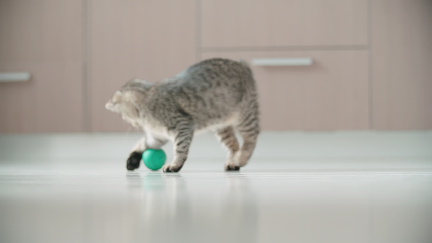 Happy small cat playing with a green jumping ball 4K. Long shot slow motion tracking a small cat around the apartment playing with small ball. | Shutterstock HD Video #1038809747