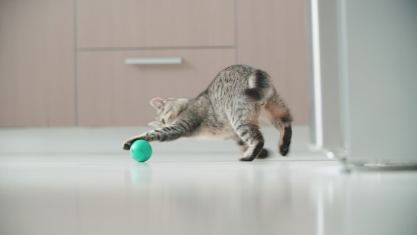 Small kitten doing funny pose while playing with a ball 4K. Long shot slow motion tracking a small cat around the apartment playing with small ball. | Shutterstock HD Video #1038809756