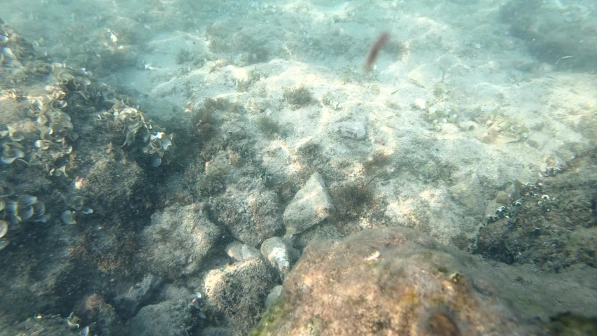 Slow motion underwater view of diverse sea bed sun rays pattern   Shutterstock HD Video #1038835364